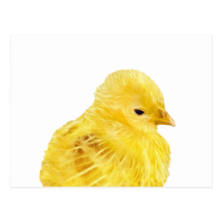 Cute yellow baby Chick Postcard