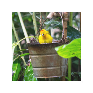 Cute, yellow bird bathing in a bucket canvas print