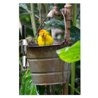Cute, yellow bird bathing in a bucket dry erase board
