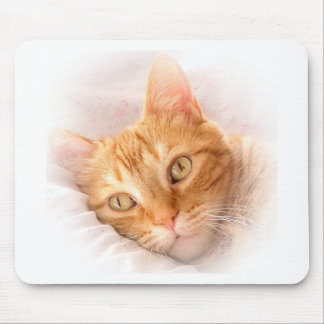 cute yellow cat resting mouse pad