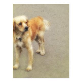 Cute Yellow Dog Postcard
