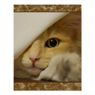 Cute Yellow Kitten Poster
