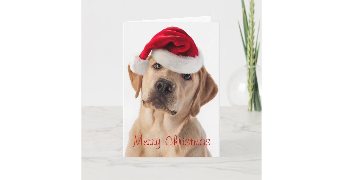 Cute Yellow Lab dog with Santa Hat Christmas card | Zazzle.com