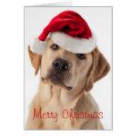 Cute Yellow Lab dog with Santa Hat Christmas card