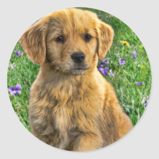 Cute yellow retriever puppy with flowers in back classic round sticker