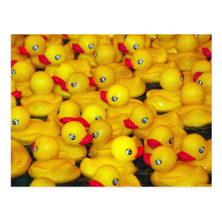 Cute yellow rubber duckies postcard