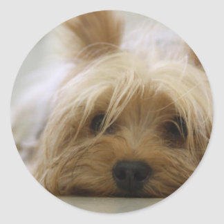 Cute Yorkie Classic Round Sticker