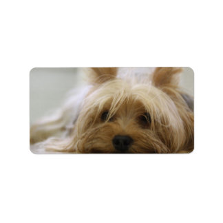 Cute Yorkie Label