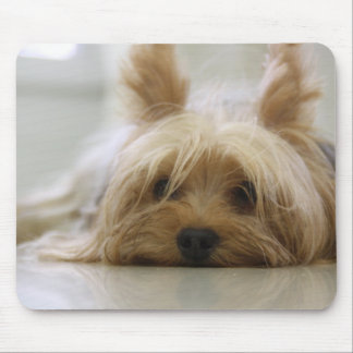 Cute Yorkie Mouse Pad