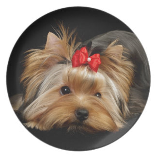 Cute yorkie party plates