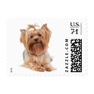 Cute yorkie postage