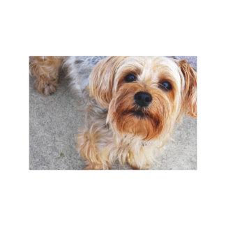 Cute Yorkie Puppy Canvas Print