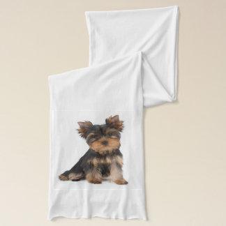 Cute yorkie puppy scarf