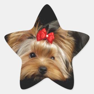 Cute yorkie star sticker