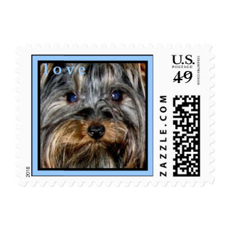 CUTE YORKIES  ( I AM KID VICIOUS ) LOVE STAMP