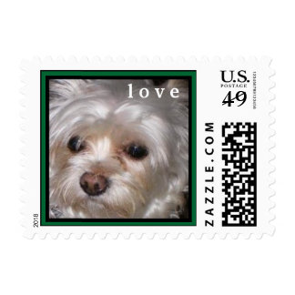 CUTE YORKIES  ( MY NAME IS SCOOBY DOO) LOVE STAMP