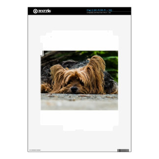 Cute Yorkshire Puppy Decal For iPad 2