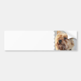 Cute Yorkshire Terrier Bumper Stickers