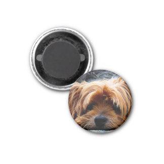 Cute Yorkshire Terrier Dog Magnet