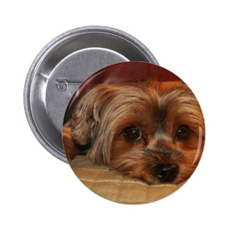 Cute Yorkshire Terrier Dog Pinback Button