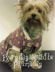 Yorkie Quotes Gifts On Zazzle