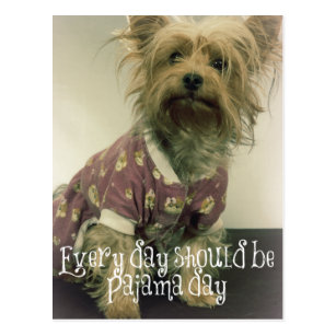 Funny Yorkie Quotes Gifts On Zazzle