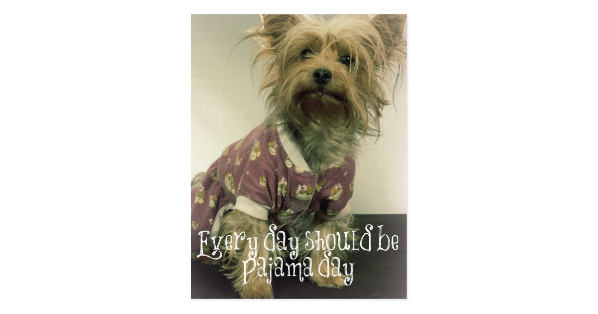 Cute Yorkshire Terrier In Pajamas With Quote Postcard Zazzle Com