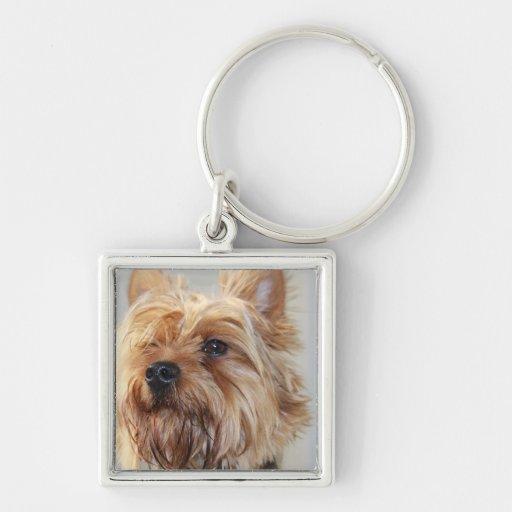 Cute Yorkshire Terrier Keychain