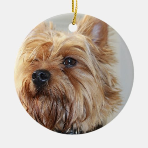 Cute Yorkshire Terrier Ornament
