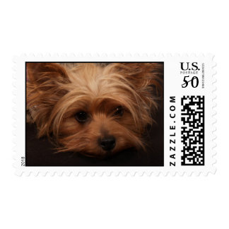 Cute Yorkshire Terrier Stamps