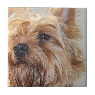Cute Yorkshire Terrier Ceramic Tiles