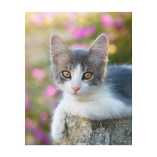 Cute Young Bicolor Cat Kitten Photo -  Wrapped Canvas Print