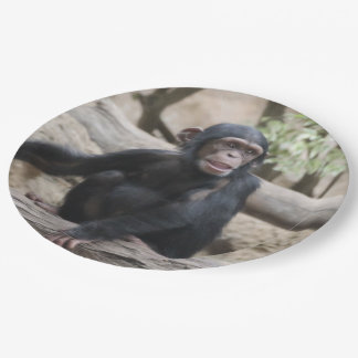 cute young chimpanzee paper plate