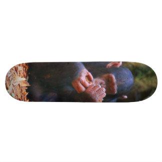 cute young chimpanzee skateboard deck
