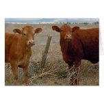 Cute Young Couple - Red Cows Heifer Horns - Blank Card