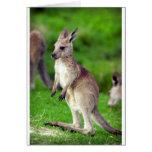 Cute young Kangaroo Card