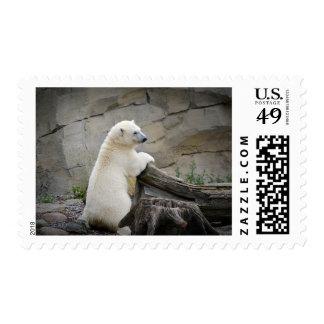 Cute Young Polar Bear Arctic Animal Stamp