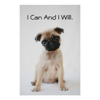 Cute Young Pug Dog Poster