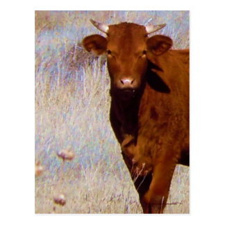 Cute Young Red Cow Cattle with Horns Western Postcard