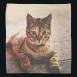 "Cute Young Tabby Cat Kitten Kitty Pet Bandana<br><div class=""desc"">Sweet Cute Young Cat Kitten Kitty Pet Photography.   Visit my Shop:  http://www.zazzle.com/wonderfulpictures*</div>"