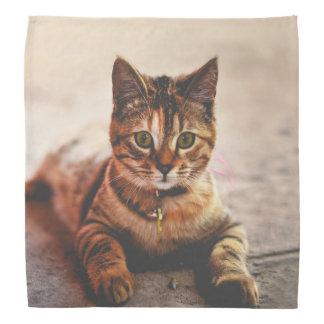 Cute Young Tabby Cat Kitten Kitty Pet Bandana