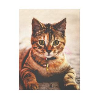 Cute Young Tabby Cat Kitten Kitty Pet Canvas Print