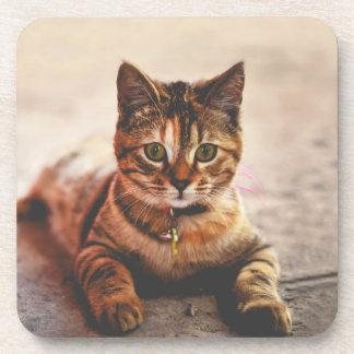 Cute Young Tabby Cat Kitten Kitty Pet Drink Coaster