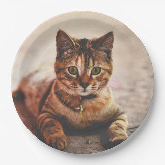 Cute Young Tabby Cat Kitten Kitty Pet Paper Plate