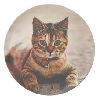 Cute Young Tabby Cat Kitten Kitty Pet Plate