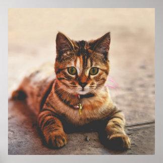 Cute Young Tabby Cat Kitten Kitty Pet Poster