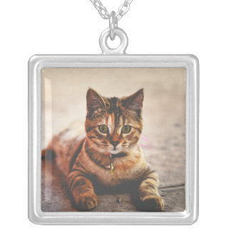 Cute Young Tabby Cat Kitten Kitty Pet Silver Plated Necklace