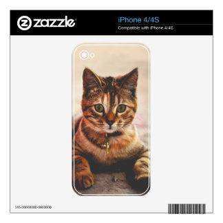 Cute Young Tabby Cat Kitten Kitty Pet Skins For The iPhone 4