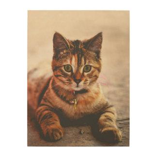 Cute Young Tabby Cat Kitten Kitty Pet Wood Wall Decor