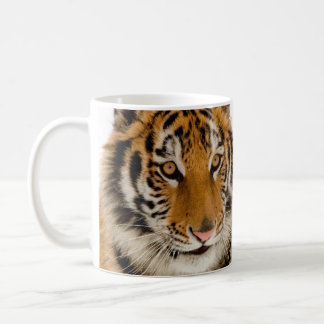 Cute Young Tiger Picture Coffee Mugs